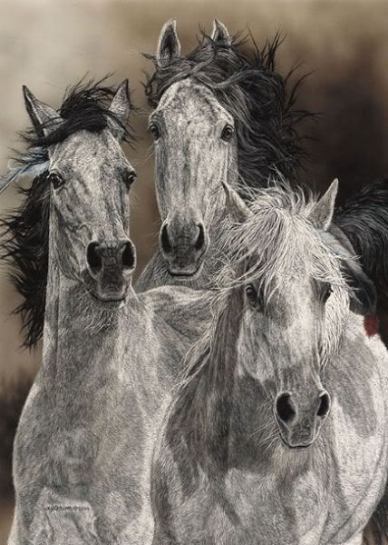"Pencil Sketch - ""Horses"" - Artist Unknown"
