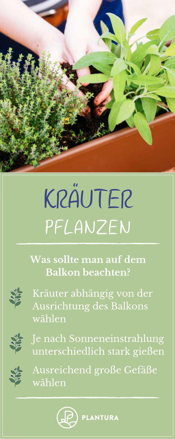 Kräuter pflanzen – Balkon: Hier lernst du, wie man Kräuter pflanzt …   – Gartenheldinnen Gruppenboard