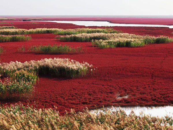 liaohe-wetland-01.jpg (600×450)