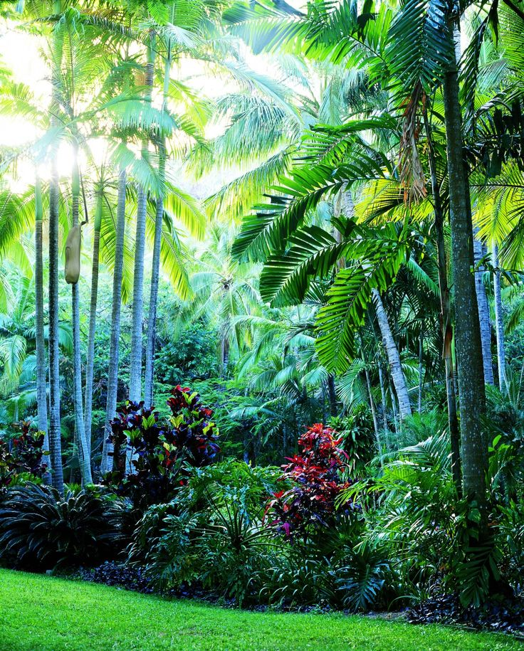 605 best Tropical Garden images on Pinterest Tropical garden