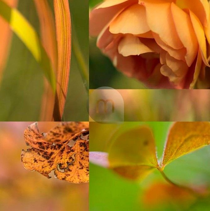 Floral collages © mauritius images/Garden World Images