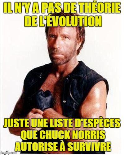Top 21 des meilleures blagues sur Chuck Norris | Page 4