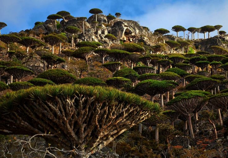 Socotra- Yemen