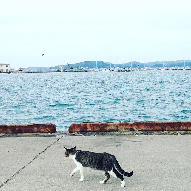 【t_yuri32】さんのInstagramをピンしています。 《海とニャン 歩みの先は釣り人たち  #海 #sea #のらねこ #野良猫 #ねこ #ねこ部 #ねこ好き #ねこすたぐらむ #neko #nekostagram #cat #catlove #catlover #catslovers #catstagram》