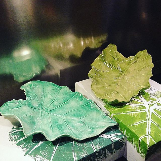 Alocasias con su correspondiente packaging, Arobe Cerámica.