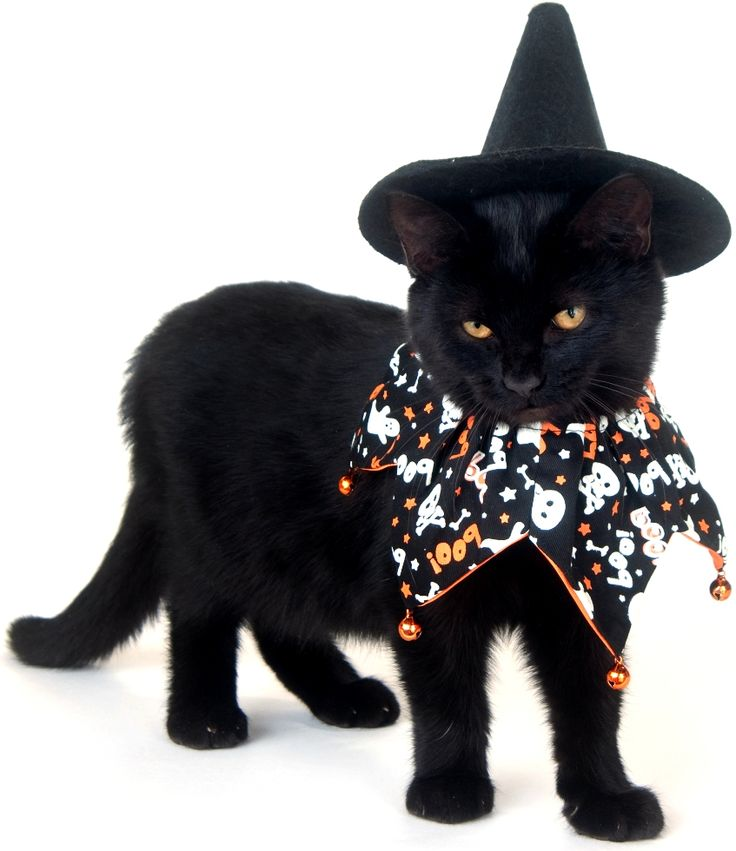 safe halloween costume tips for your pets dog pet care corner - Halloween Costumes For Kittens Pets