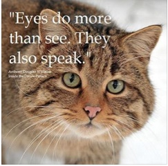 It S All In The Eyes Wild Cats Beautiful Cats Feral Cats