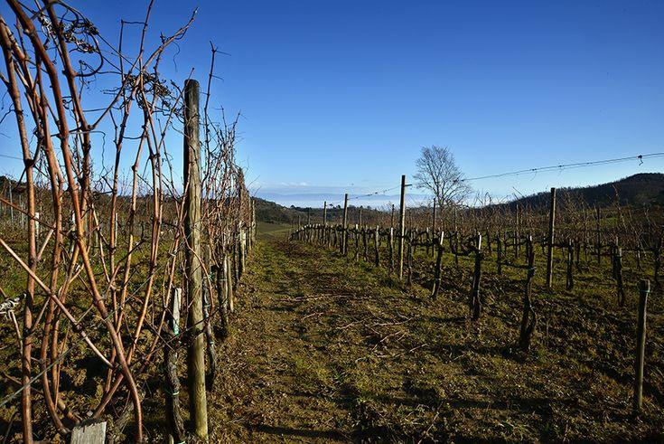 Salcheto Winery - Casa vinicola e vigneto  Montepulciano Toscana Italia Cantina sostenibile dell'anno 2014 per la Guida Vini D'Italia 2014 del Gambero Rosso