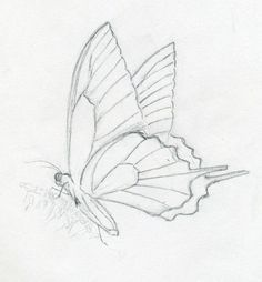Butterfly Drawings | Make Butterfly Sketch Quickly And ...