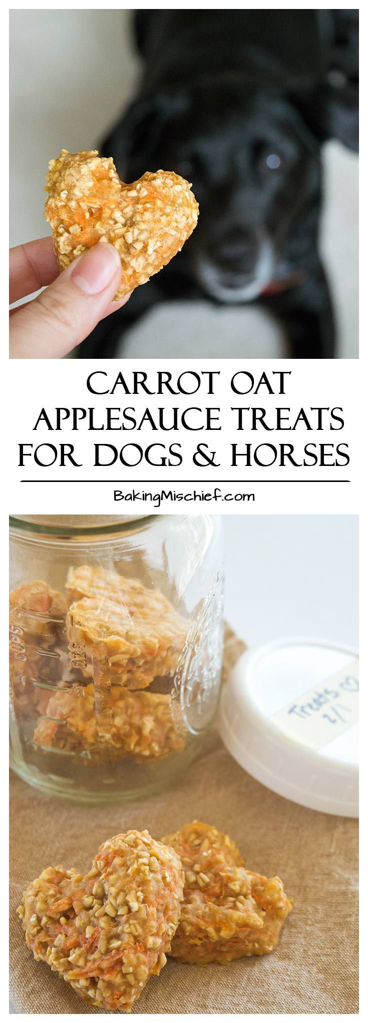 853 best food international foods and recipes images on pinterest carrot oat applesauce treats quick and easy four ingredient treats for dogs and horses forumfinder Choice Image