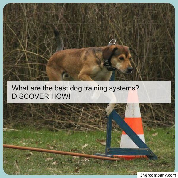 Dog Training Tricks Check Out The Image For Various Dog