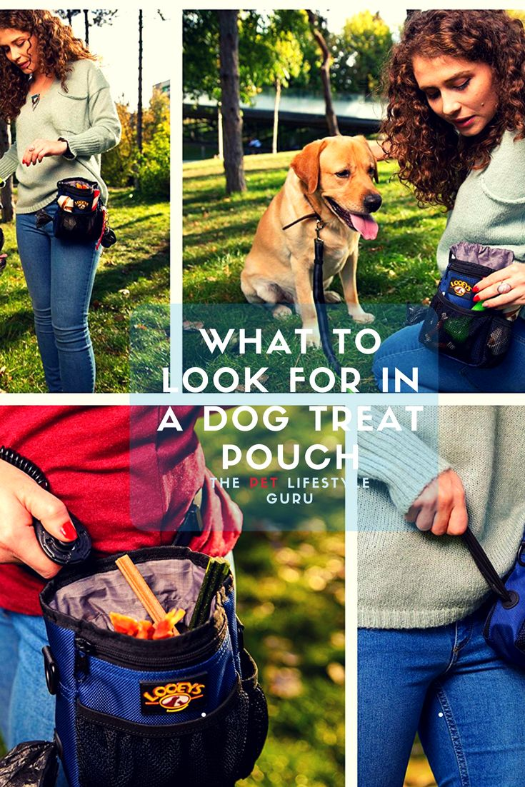 What To Look For In A Dog Treat Training Pouch
