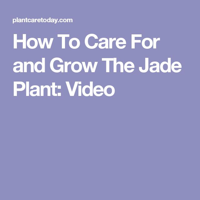 1000 ideas about jade plants on pinterest crassula ovata jade bonsai and succulents. Black Bedroom Furniture Sets. Home Design Ideas