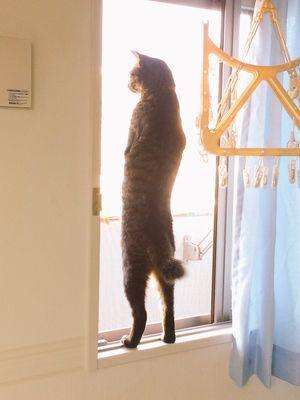 何これ!?Twitterで見た「お前、本当に猫かよ!」ってなる光景。 - NAVER まとめ