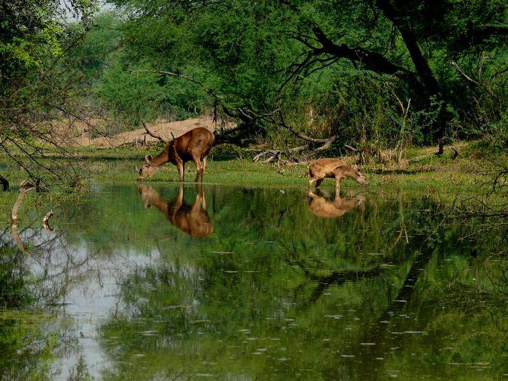 bharatpur national park in india
