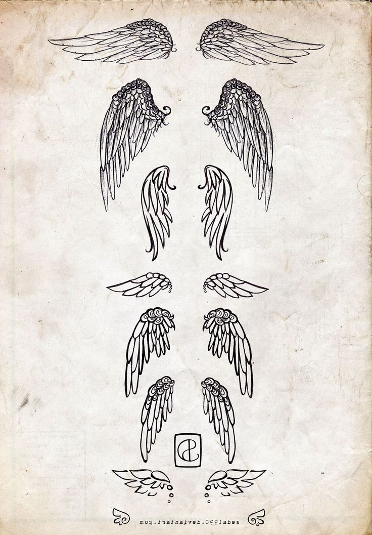 I've wanted kinda small to medium sized wings on my shoulder blades for a while now, but I've never seen a sketch of a pair that I would personally like