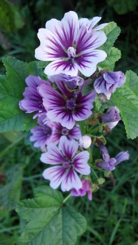 Durable Plants For The Garden: 17 Best Images About Fiori Flowers Blumen On Pinterest