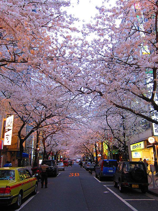 Tokyo Sakura, 2014
