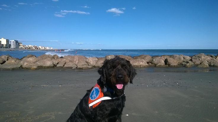 Igor le chien guide d'aveugle en gilet orange sur la plage de Montpellier