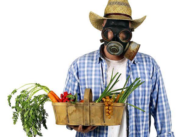 Tu ensalda puede ser tóxica: Comer cinco frutas o vegetales diarios contamina tu cuerpo con 10  pesticidas distintos.