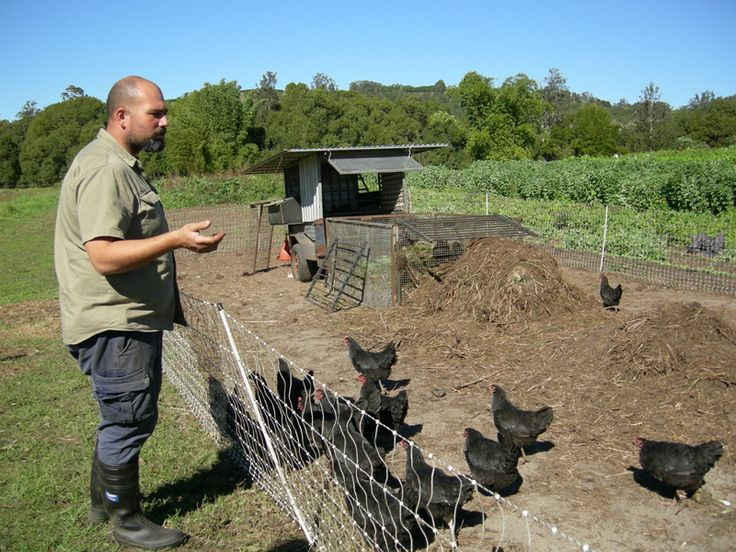 Permaculture Pilgrimage: Zaytuna Farm - chickens create compost