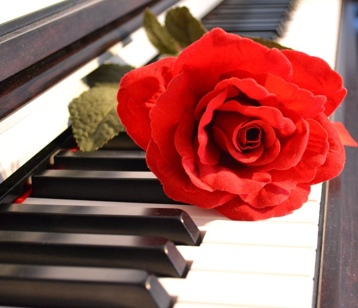 48 best roses images on pinterest red roses piano keys and pianos red rose on piano ccuart Image collections
