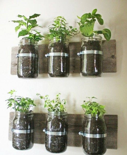 going green?: Ideas, Indoor Herbs, Herbs Gardens, You, Mason Jars Herbs, Masonjars,  Flowerpot, Wall Planters, Kitchens Herbs