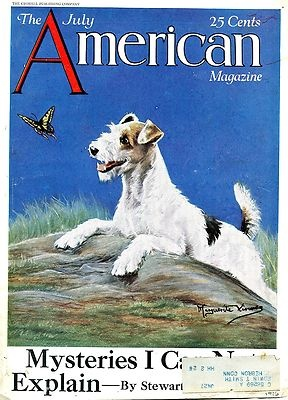 1926 Original COLOR Mag COVER Art. WIRE-HAIRED Terrier.The mystery is why there aren't more wire haired fox terriers.