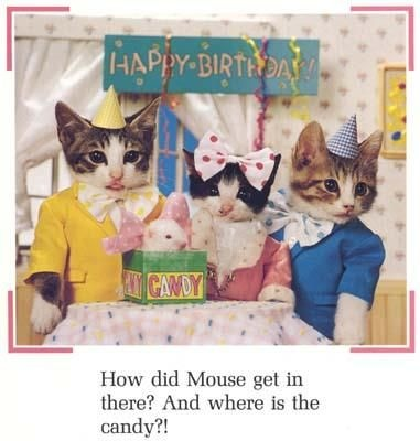 cat bday: Cat Bday, Birthday Parties, Candy, Crazy Cat, Cat Lady
