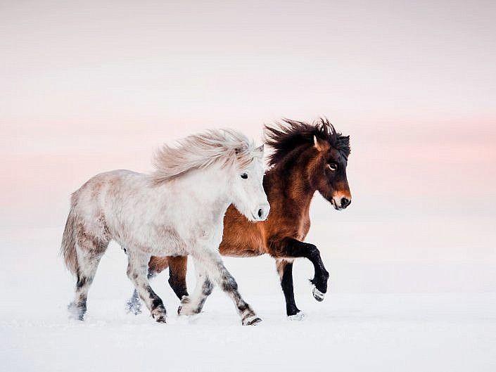 Pferde Anna Ibelshauser Photography Pferde Hubsche Pferde