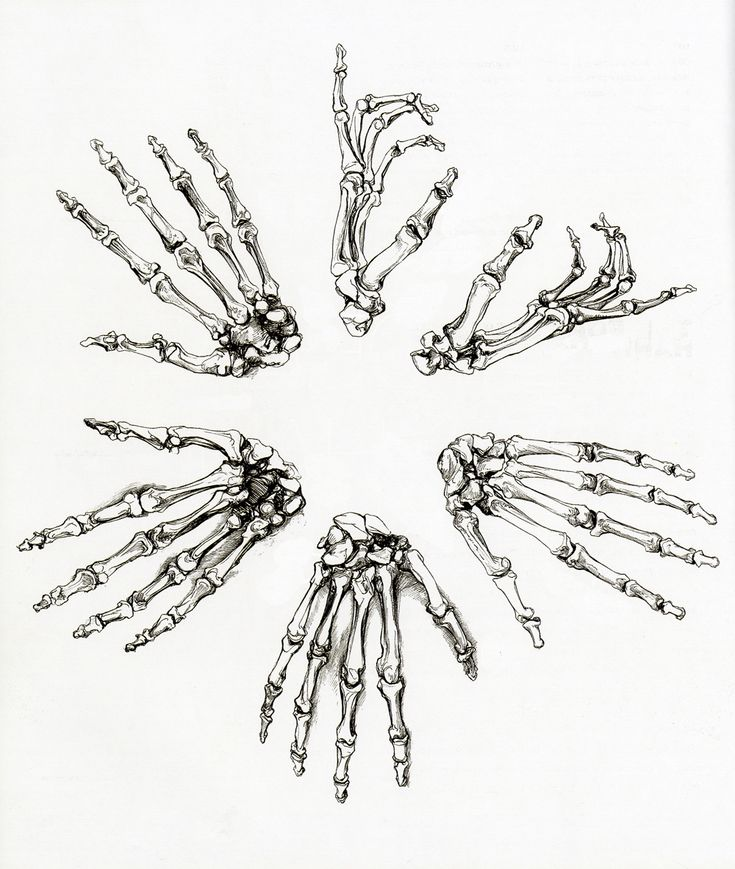 15 best Hand bones-- Skeleton images on Pinterest | Skeletons ...