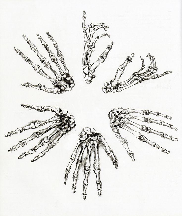 How exactly do you 'study' anatomy? : learnart - reddit