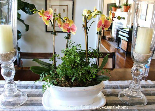 Best orchids images on pinterest orchid arrangements
