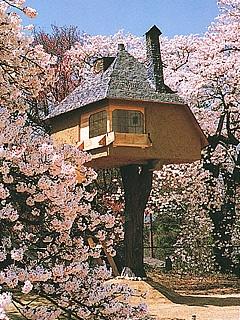 "Tea Room ""Tetsu"" in Japan. Best spot to enjoy Cherry blossoms!: Tea Rooms, Tea House, Happy Place, Tree Houses, Places I D, Dream Place, Japanese Tea, Room Tetsu"