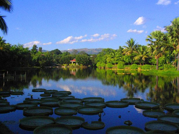 Xishuangbanna Tropical Botanical Garden, one of the 'Top 10 attractions in Yunnan, China' by China.org.cn.