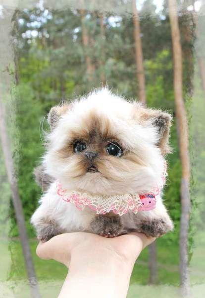 Бетти Гималайский котенок мимо Елена К.   Bear Pile