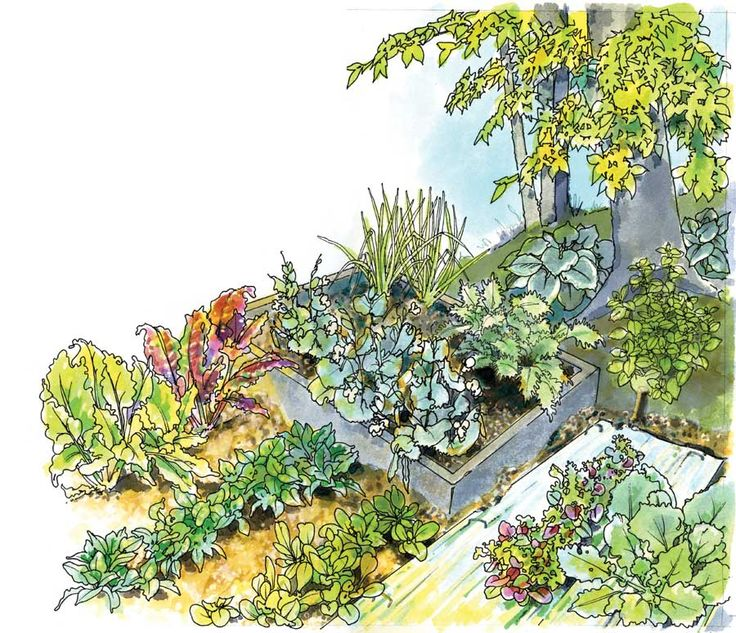 Best Vegetables to Grow in the Shade - Organic Gardening - MOTHER EARTH NEWS