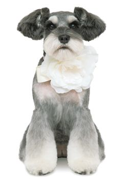 華やかな女子スタイル+--愛犬の友 ヘアスタイルカタログ--