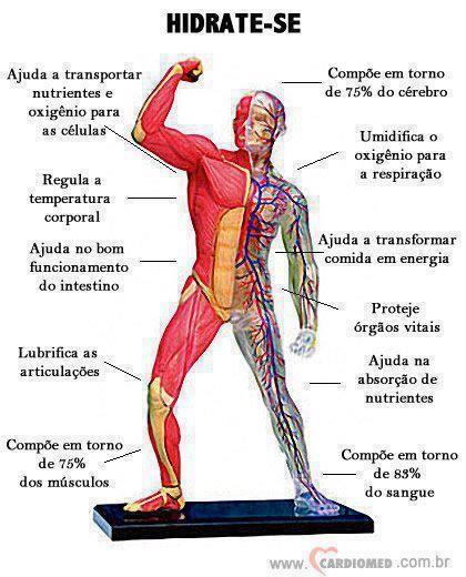 Gy Farias: A importância da água para o organismo humano