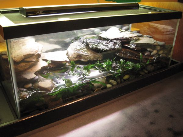 fire belly toad habitat - Google Search