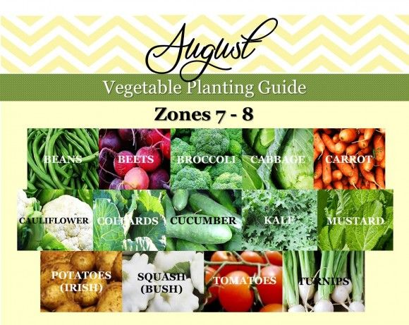 vegetable planting guide gardening guide zone 7 and zone 8
