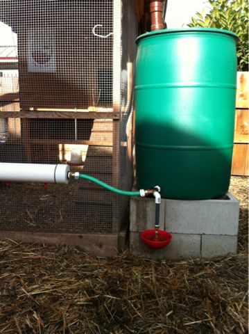 Greatest watering system ever.  I will never again need to water my urban flock.