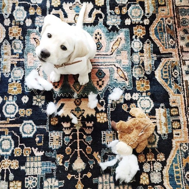 Via witanddelight_ | A bear and her moose, 20 pounds ago. #tbtorwhatevs