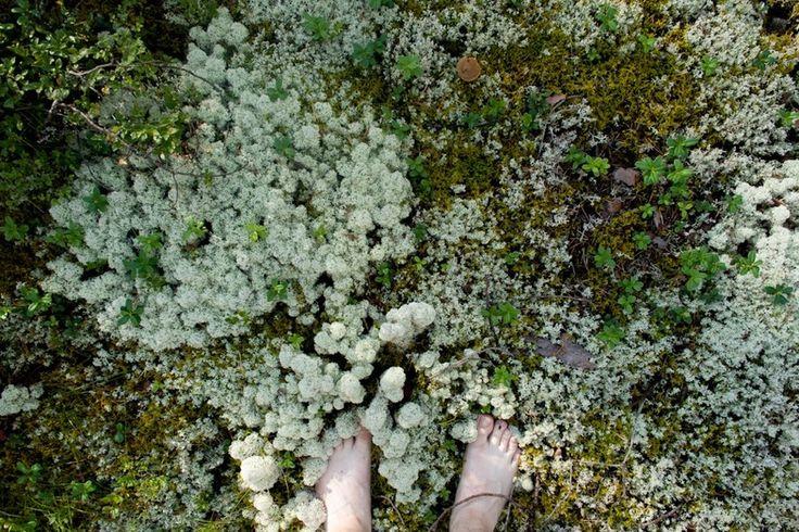 フィンランドのこけ野原 : http://www.ignant.de/wp-content/uploads/2012/09/mp_rokua03.jpg