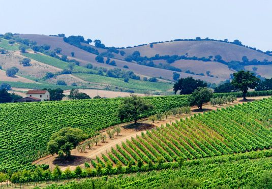 Food and wine holiday in Tuscany   Save up to 70% on luxury travel   Secret Escapes