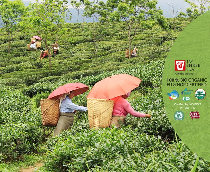 Jay Shree Tea is proud to produce the finest organic Darjeeling tea.Here is What Our Respected President, Mr. Pranab Mukherjee has to say regarding tea quality