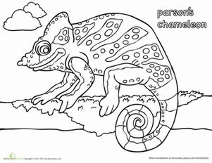 The Lion And The Mouse 36 on Chameleon Coloring Page Chameleons Worksheets And Kindergarten