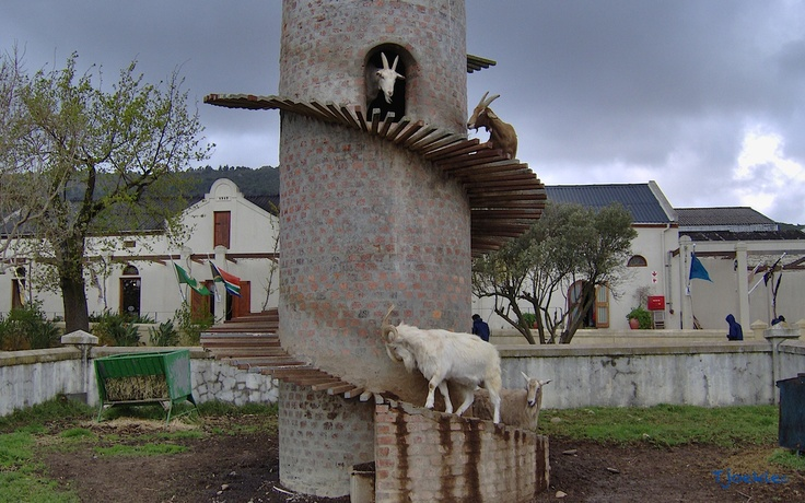 One with the goatness. - Fairview Wine Estate - Pearl - South Africa