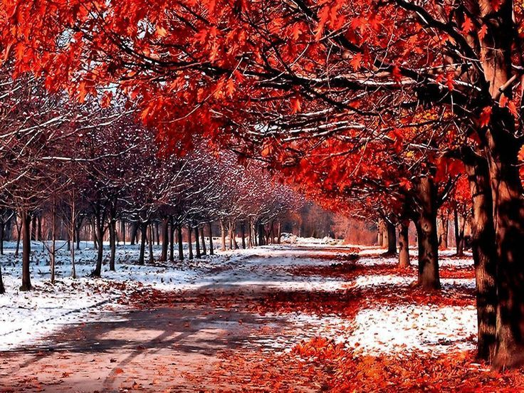 Snow And Leaves Wallpapers Wide | Free High Definition Wallpapers