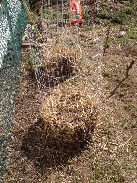 Make plant supports from wire fencing